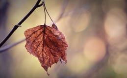 Twee drogen bladeren op een tak royalty-vrije stock fotografie