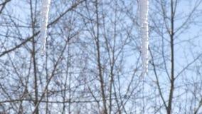 Twee druipende ijskegels stock footage