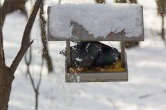 Twee duiven worden gegeten in een trog in een de winterpark stock afbeeldingen