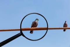 Twee duiven zitten op de buis royalty-vrije stock fotografie