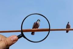 Twee duiven zitten op de buis stock foto's