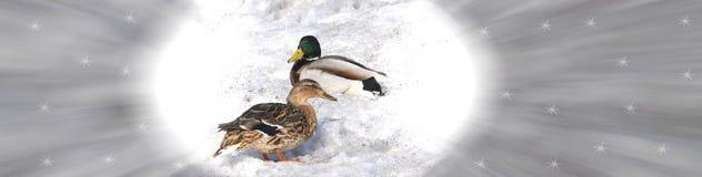 Twee eenden op de sneeuw Royalty-vrije Stock Foto's