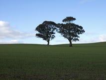 Twee eenzame bomen royalty-vrije stock afbeeldingen