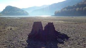 Twee Eenzame boomstammen Royalty-vrije Stock Afbeelding