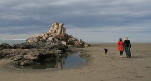 Twee elegante dames die hond op mooi strand lopen   Stock Afbeelding