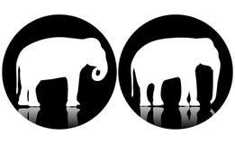 Twee embleemolifanten Royalty-vrije Stock Afbeeldingen