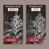 Twee etiketten met Amaranthus de amarant en het Chenopodium van cruentusaka - quinoa schets op zwarte De inzameling van graangewa Stock Afbeelding