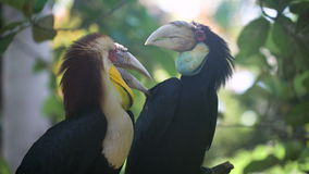 Twee exotische vogels die op een boom zitten vertakken zich in de regenwoud Onaangeroerde natuurlijke schoonheid in het natuurres stock footage