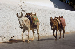 Twee ezels op de straten Stock Foto