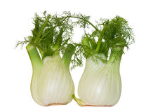 Twee fennels stock foto's