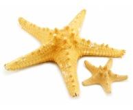 Twee geïsoleerd (klein en grote) zeesterren Royalty-vrije Stock Fotografie
