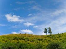 Twee geïsoleerde bomen bovenop een groene heuvel en een mooie blauwe hemelachtergrond Stock Foto's