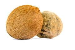 Twee geïsoleerde kokosnoten Stock Afbeeldingen