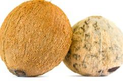Twee geïsoleerde kokosnoten Royalty-vrije Stock Afbeeldingen