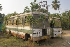 Twee gebroken verlaten vuile witte Indische die bussen met groene klimopinstallaties worden overwoekerd op de achtergrond van royalty-vrije stock fotografie