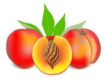 Twee geheel rijp die perzikfruit met de helft en bladeren op witte achtergrond worden geïsoleerd royalty-vrije illustratie