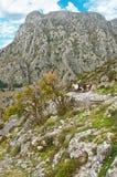 Twee geiten in bergen Stock Afbeelding
