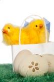 Twee gele babykuikens Stock Fotografie