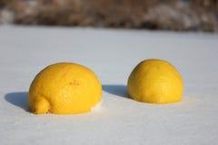 Twee gele citroenen in de witte sneeuw Stock Foto