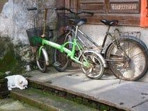 Twee geparkeerde fietsen en één witte hond royalty-vrije stock afbeeldingen