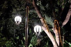Twee gesmede uitstekende lantaarns verlichten de bladeren van de boom Helder licht die van straatlantaarns afkomstig zijn stock foto