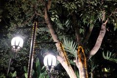 Twee gesmede uitstekende lantaarns verlichten de bladeren van de boom Helder licht die van straatlantaarns afkomstig zijn royalty-vrije stock fotografie