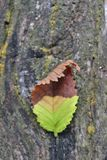 Twee Gestemd Autumn Leaf Macro stock foto's