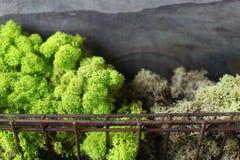 Twee-gestemd groen mos Stock Afbeelding