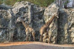 Twee giraffen in de dierentuin Stock Foto's