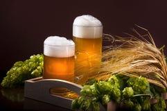 Twee glazen bier, tarwe en hop stock foto's