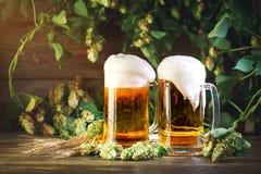 Twee glazen vers bier en groene hop op houten lijst stock fotografie