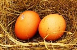Twee gouden eieren Royalty-vrije Stock Foto