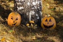 Twee grappige Halloween-pompoenen onder de boom Stock Foto