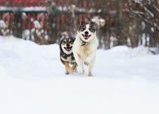 Twee grappige honden lopen gelukkig over de witte sneeuw Royalty-vrije Stock Foto's