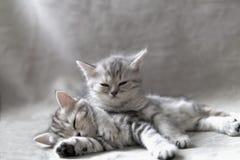 Twee grappige katjes stock foto
