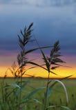 Twee grassprietjes bij zonsondergang Stock Foto