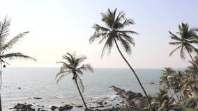 Twee groene palmen op de achtergrond van de oceaan met stenen en blauwe duidelijke hemel stock videobeelden