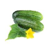 Twee Groenten van de Komkommer met Blad en Bloem Royalty-vrije Stock Afbeeldingen