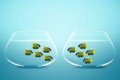 Twee groepen zeeëngel in fishbowls Royalty-vrije Stock Foto