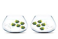 Twee groepen zeeëngel in fishbowls Stock Afbeeldingen