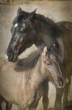 Twee groot en kleine paarden Royalty-vrije Stock Afbeelding