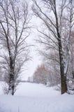 Twee grote bomen in de winter Royalty-vrije Stock Afbeelding