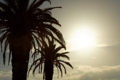 Twee grote palmen bij zonsondergang met zon tussen hun bladeren Stock Foto's