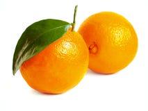 Twee grote sinaasappelen Stock Afbeelding