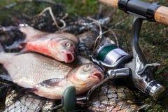 Twee grote zoetwater gemeenschappelijke brasemvissen en hengel met spoel op schepnet stock afbeeldingen
