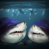 Twee haaien hebben een pret Stock Fotografie