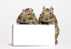Twee hamsters met lege affiche in poten Stock Foto's