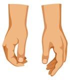 Twee handen Stock Afbeelding