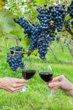 Twee handen die met rode wijn dichtbij blauwe druiven roosteren Stock Foto's