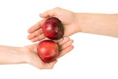 Twee handen met delen van appel Stock Afbeeldingen